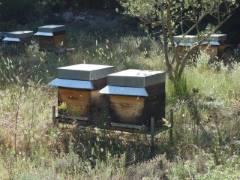Des auvents sur toutes les ruches transforment l'aspect du rucher