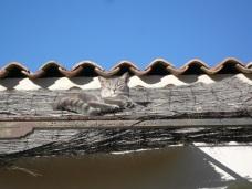 Chat gris au dessus de la terrasse à 12h10 solaire (ou 13h10 heure légale d'hiver) le 21 décembre 2008