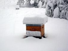 La chute de la neige peut empêcher les abeilles de sortir
