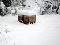Sous la neige, les abeilles patientent dans leur ruche